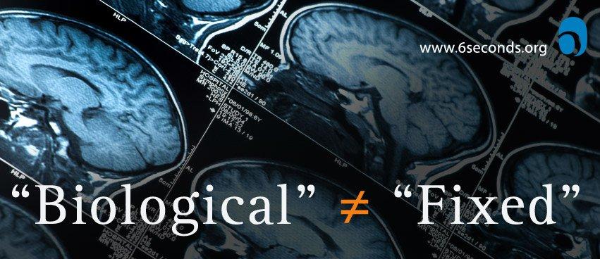 biological-fixed-brain-scan