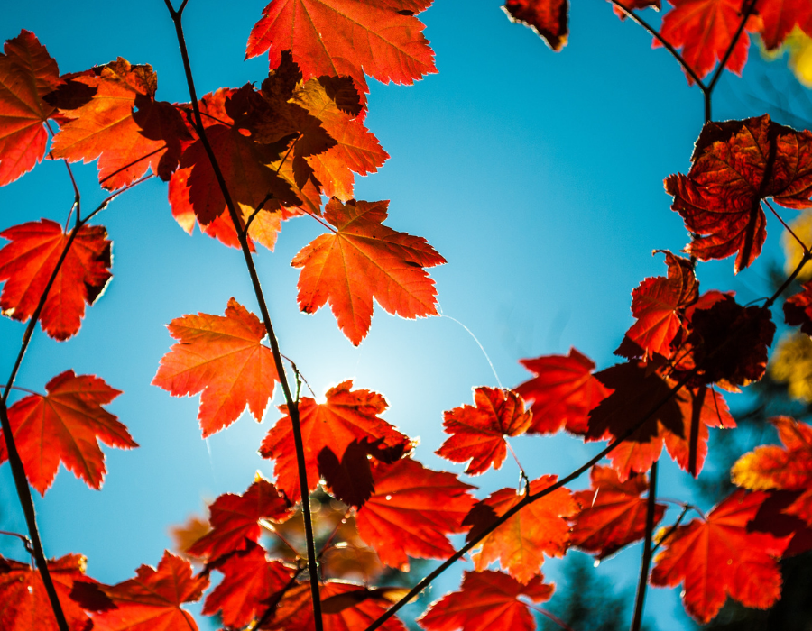 Illuminate: What Leaves Could You Shed?